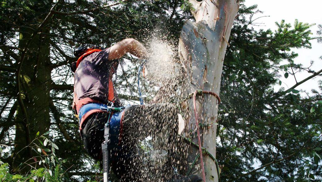 coupe arbre dangereux